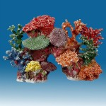 Coral Reefs for Aquariums