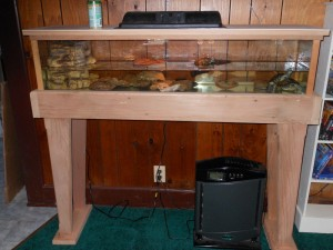 Custom Aquariums and Stands