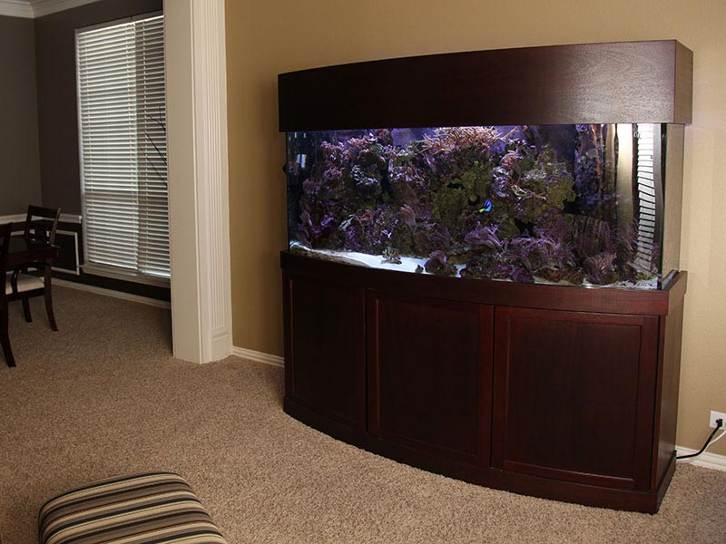 Custom Bow Front Aquarium Stands
