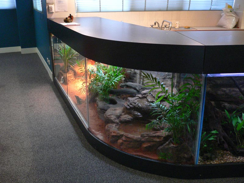 Custom Glass Aquarium Builders