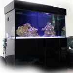 Custom Steel Aquarium Stands