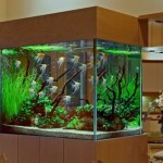 Decor Design Aquarium Fish Tank