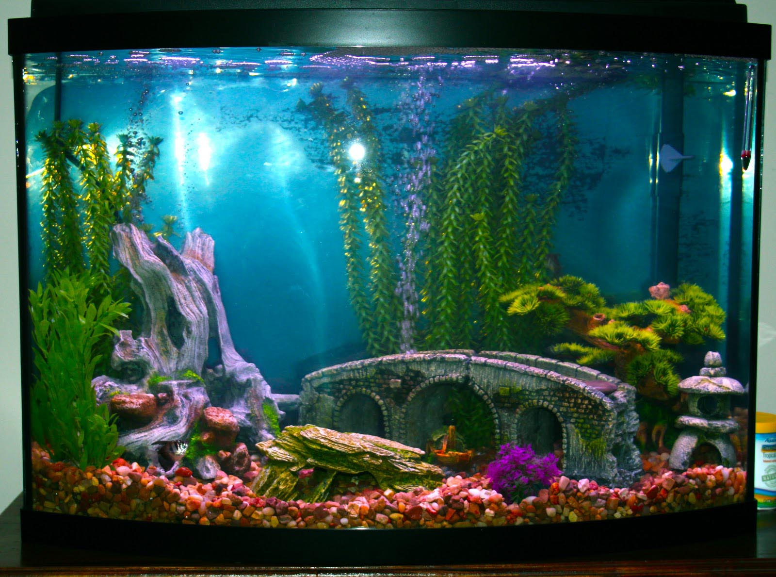 Decor for fish tanks aquarium aquarium design ideas for Aquarium decoration ideas