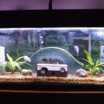 Decorating an Aquarium for Fish