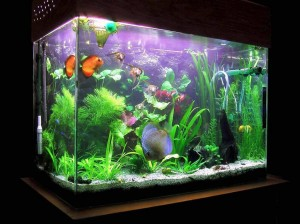 Decorating Fish Aquarium Ideas