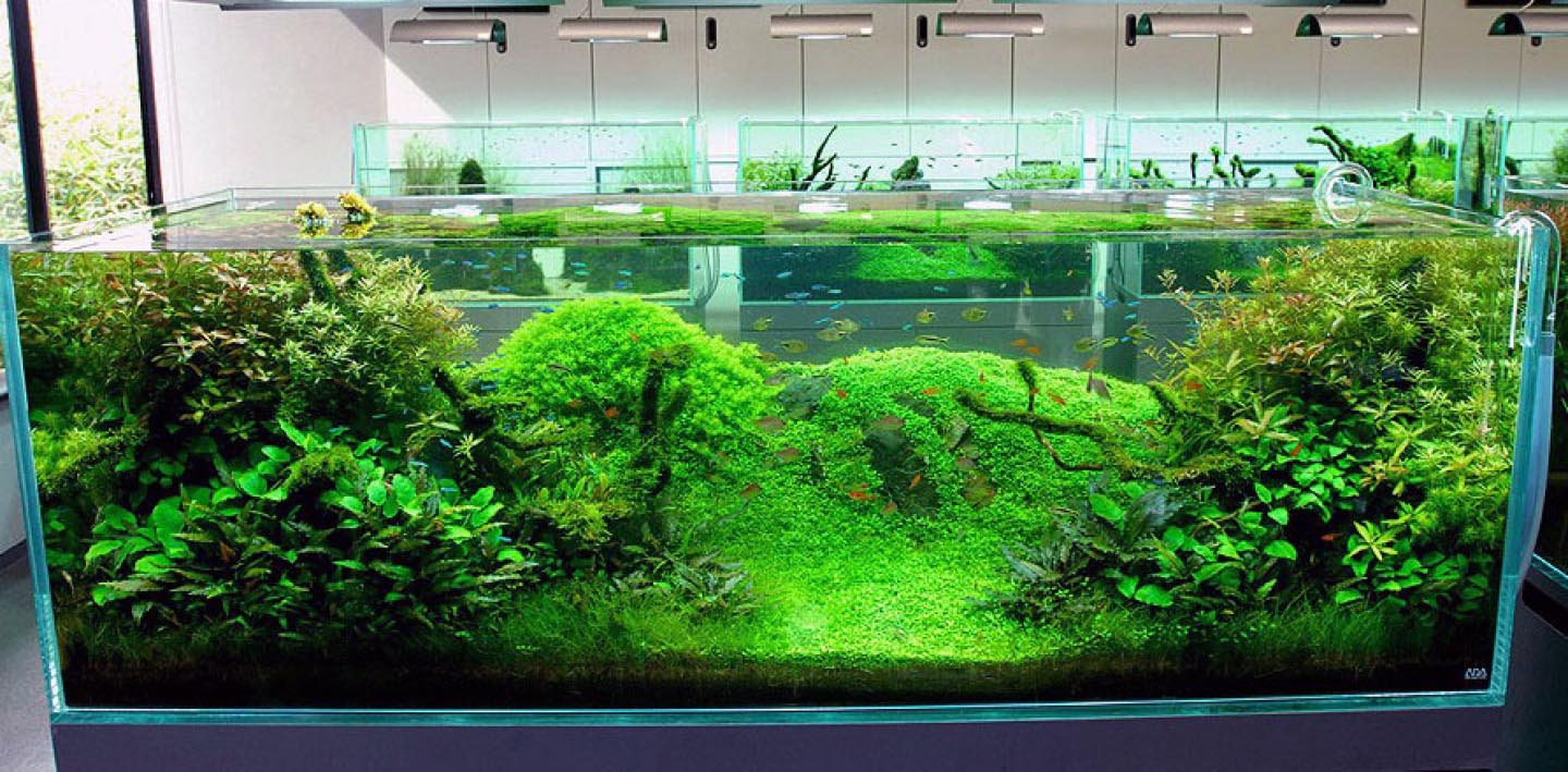 Decorating Ideas for Fish Aquariums