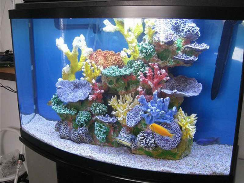 Decorations for fish aquariums aquarium design ideas for How to decorate fish tank
