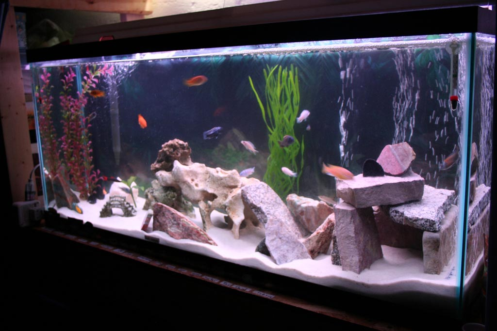 Diy fish tank decorations aquarium aquarium design ideas for Aquarium house decoration