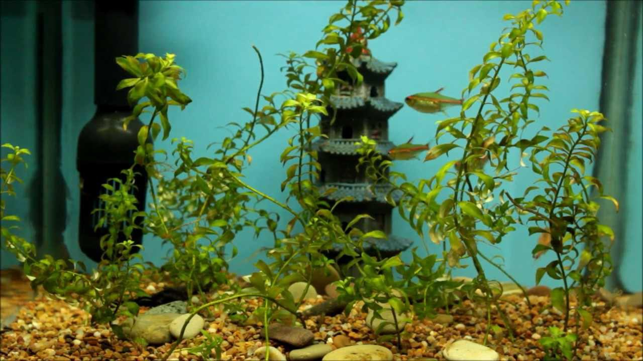 Do Live Plants Help Aquarium