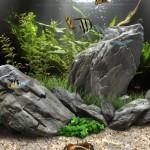 Dream Aquarium Fish Pack