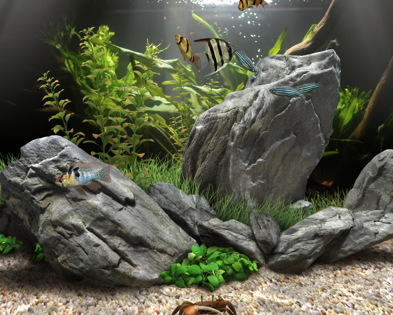Dream Aquarium Fish Pack