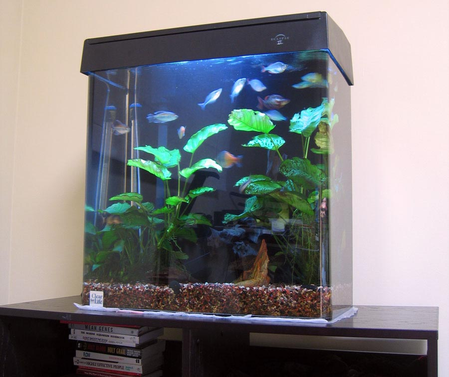 Eclipse 30 Gallon Aquarium