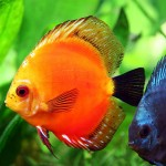 Exotic Aquarium Fish Pictures
