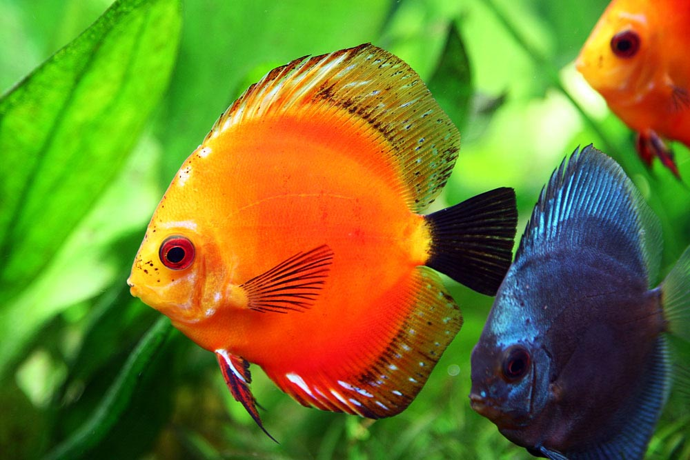 Exotic Aquarium Fish Pictures