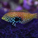 Exotic Aquarium Fish Saltwater