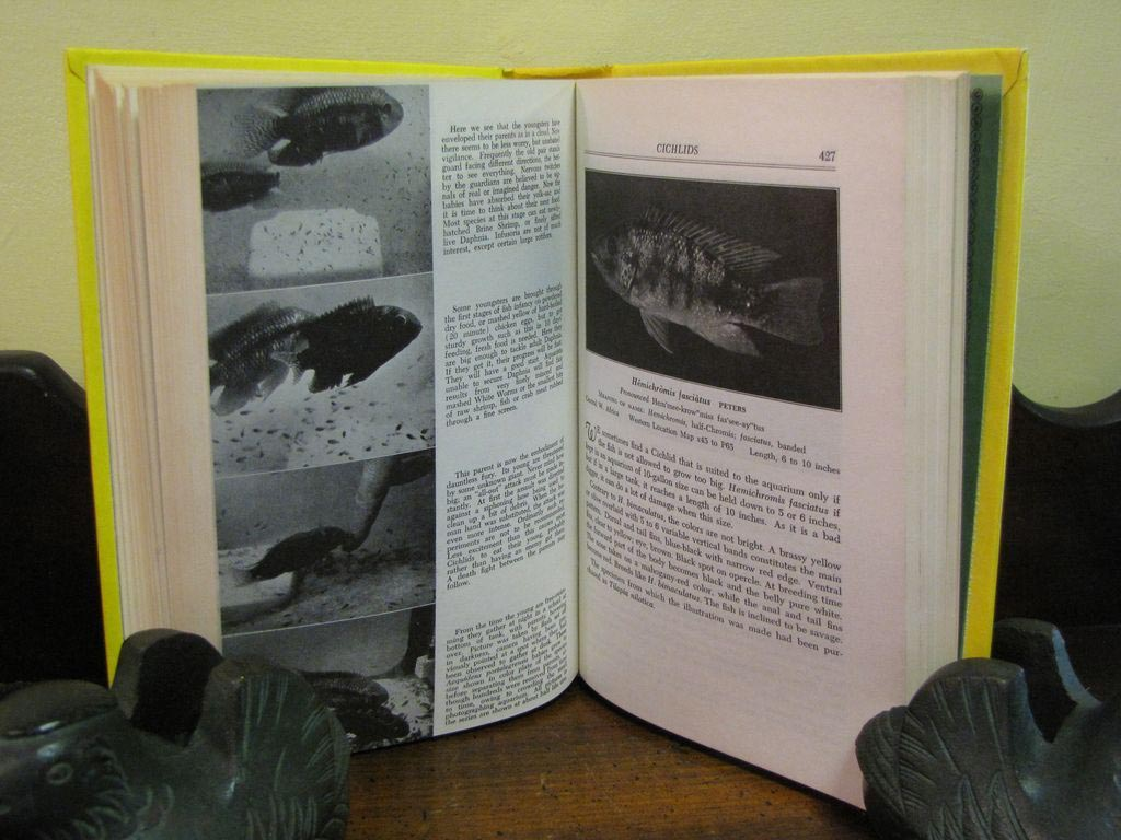 Exotic Aquarium Fishes Innes Book