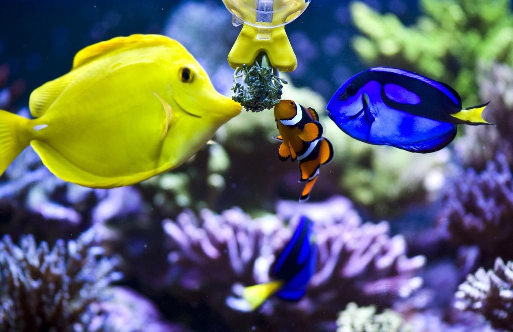 Exotic Aquarium Saltwater Fish