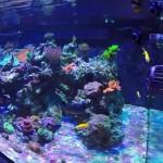 Exotic Fish Aquarium Sacramento