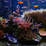 Exotic Fish for Aquariums