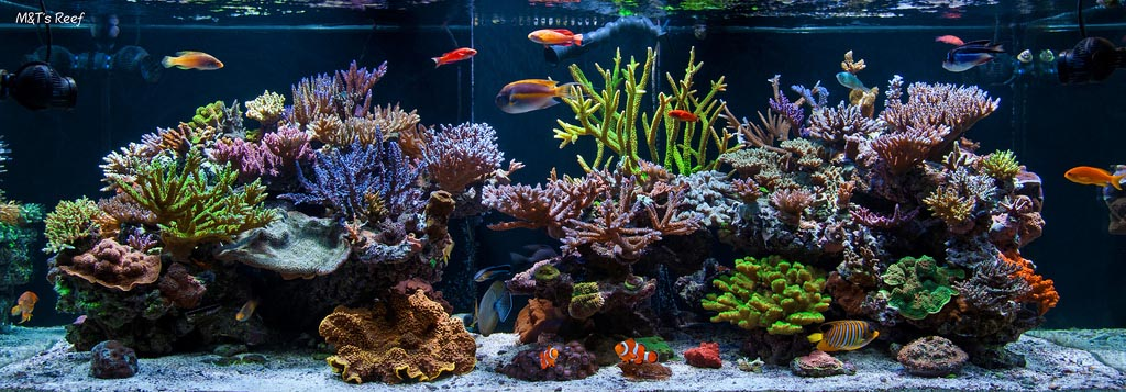 Exotic Fish for Saltwater Aquarium