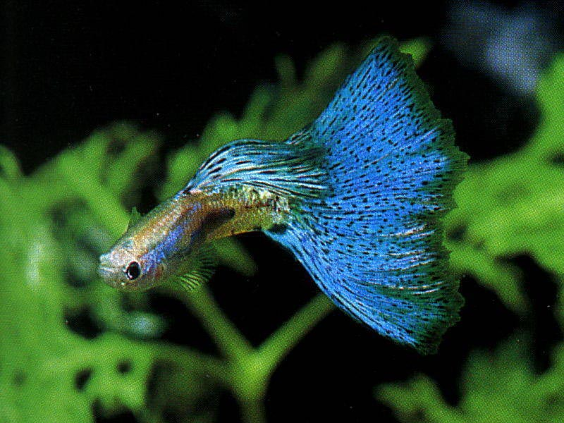 Exotic Fishes for Aquarium