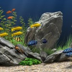 Exotic Freshwater Fish Aquarium