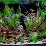 Exotic Freshwater Fish for Aquariums