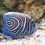 Exotic Reef Aquarium Fish