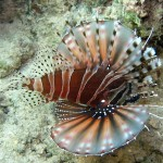 Exotic Saltwater Aquarium Fish