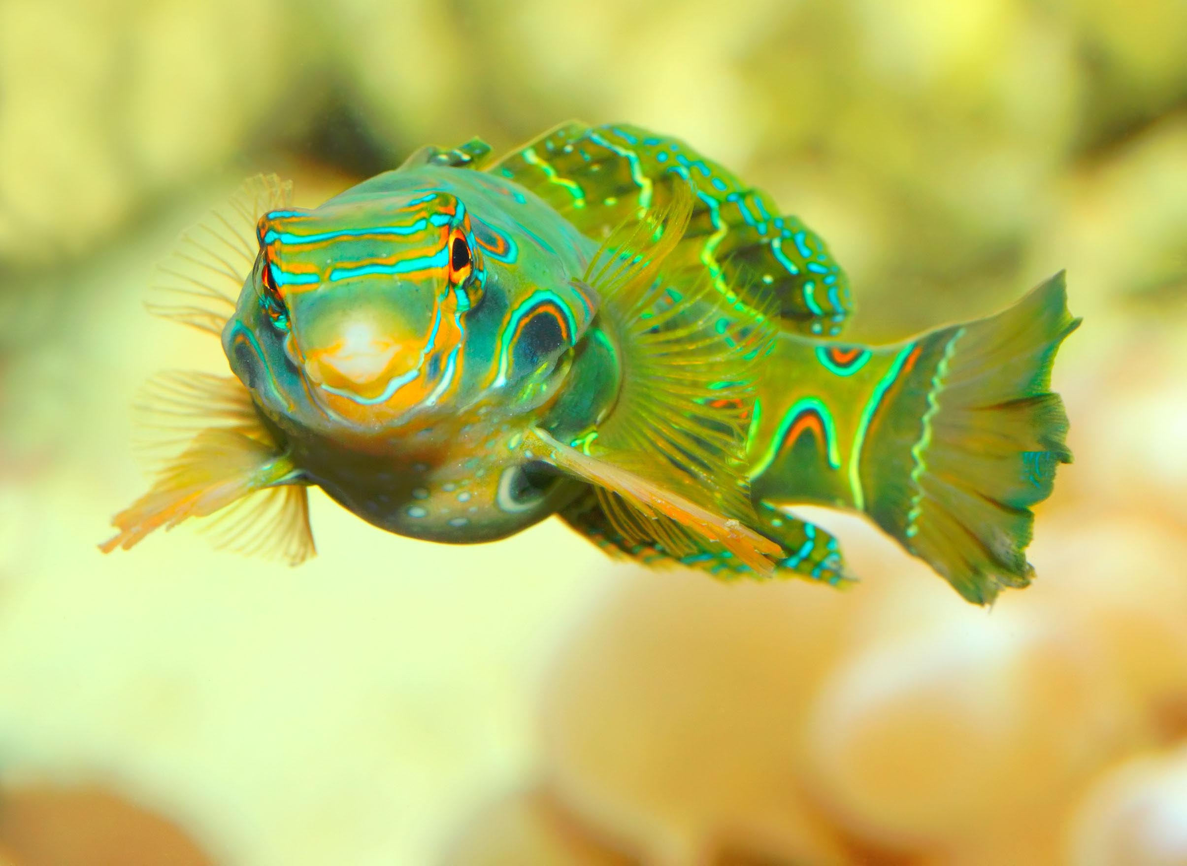 Exotic Saltwater Fish for Aquariums