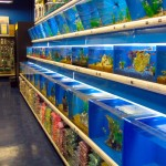 Fish and Aquarium Stores