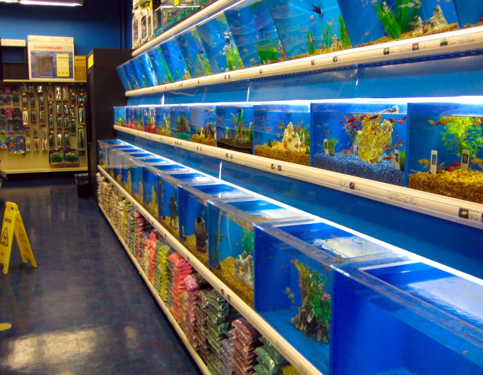 Fish and aquarium stores aquarium design ideas for Tropical fish shop