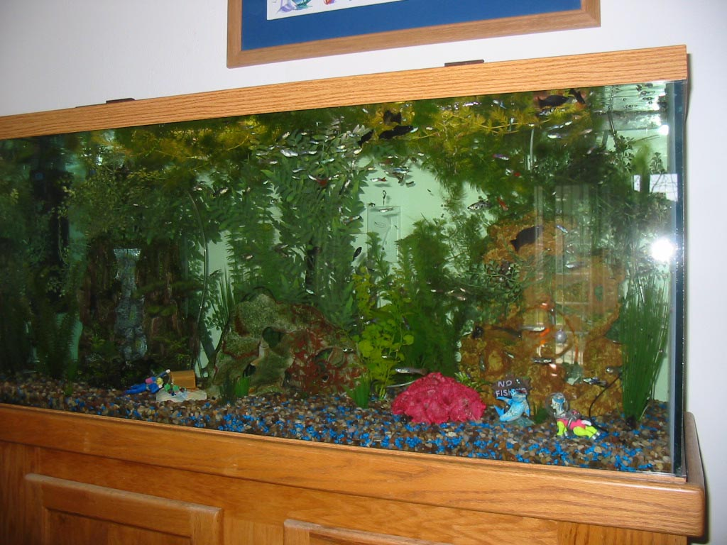 fish aquarium 100 gallon aquarium design ideas