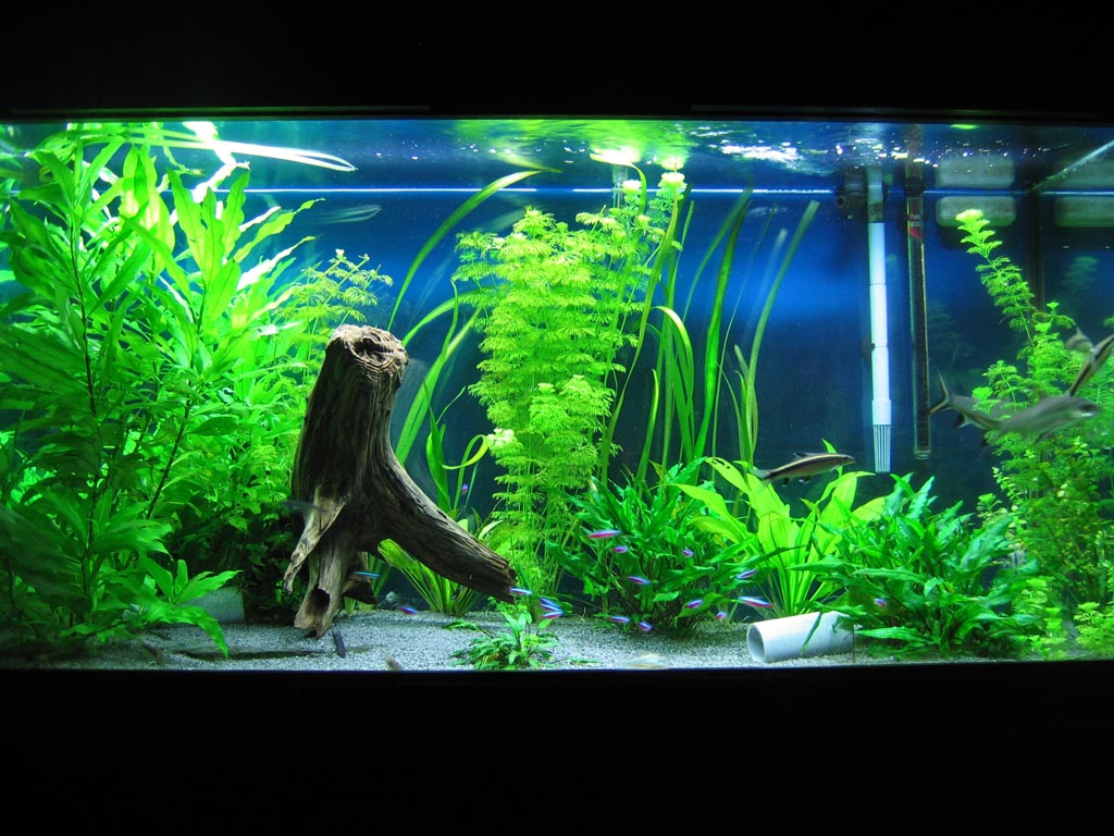 Fish Aquarium Decor Ideas