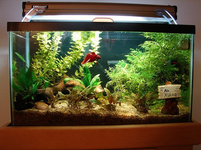 Fish aquarium decoration ideas aquarium design ideas for Freshwater fish tank setup