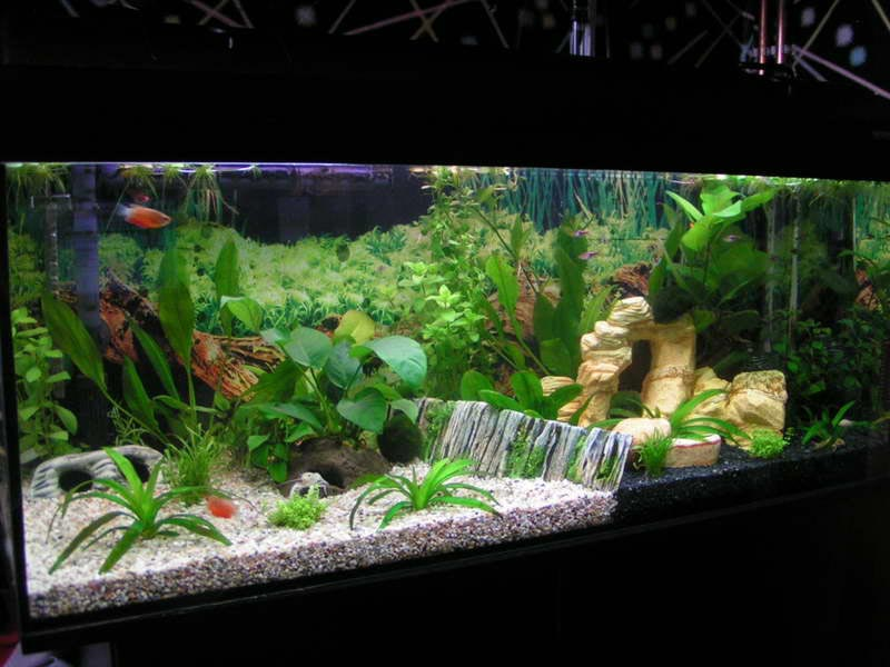 Fish Aquarium Decorations Ideas