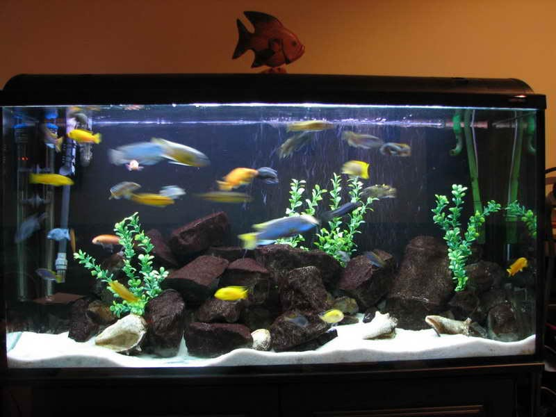 Fish Aquarium Decorations Pictures