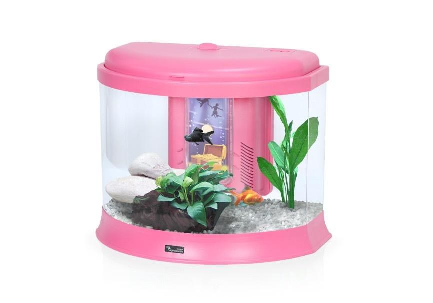 Fish Aquarium Small Size
