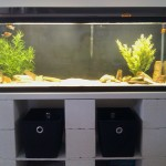 Fish Aquarium Stands 55 Gallon