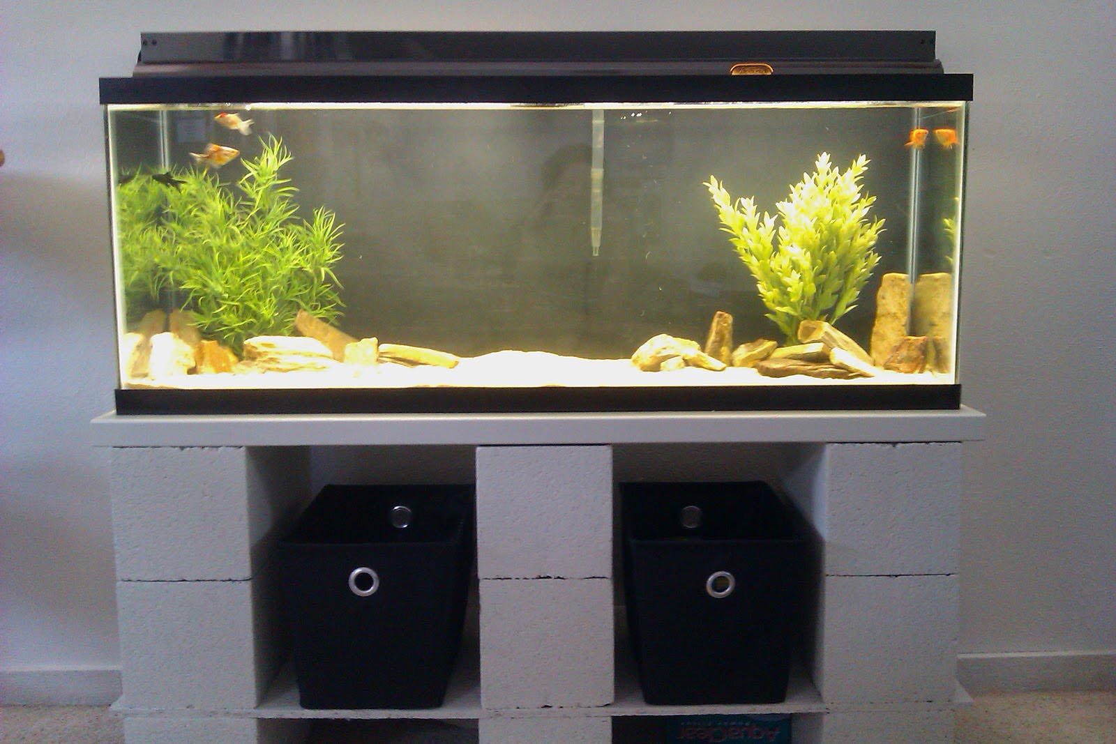 Fish aquarium stands 55 gallon aquarium design ideas for 55 gal fish tank stand