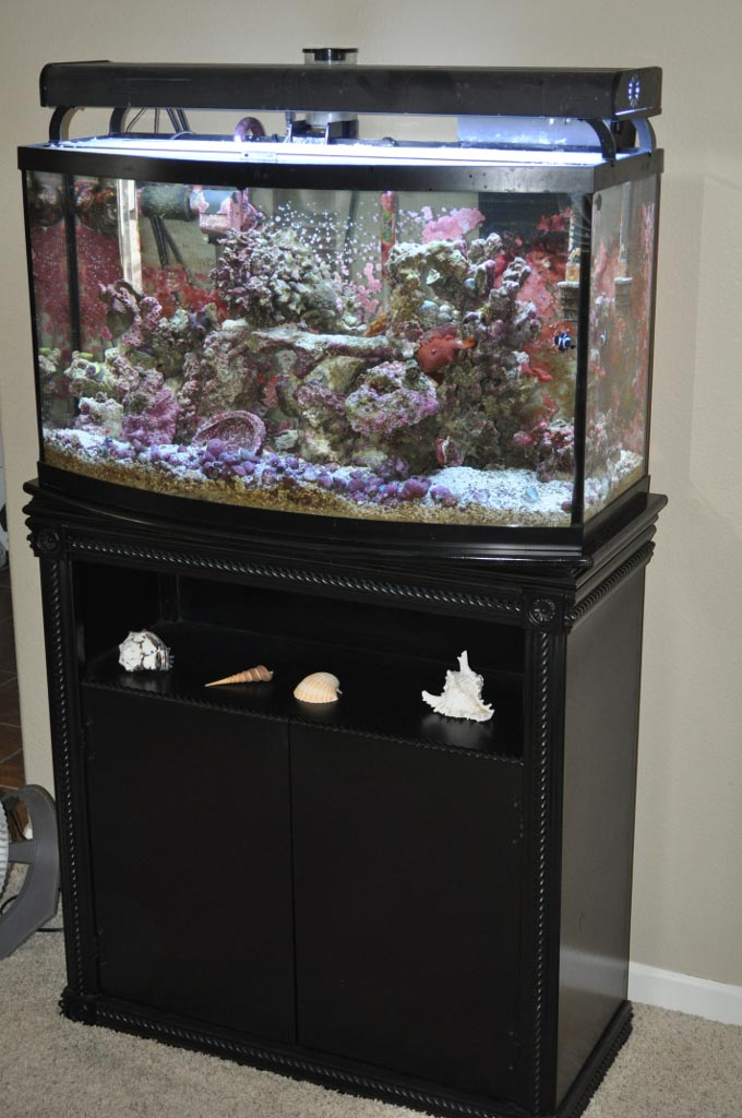 Fish Aquarium with Stands
