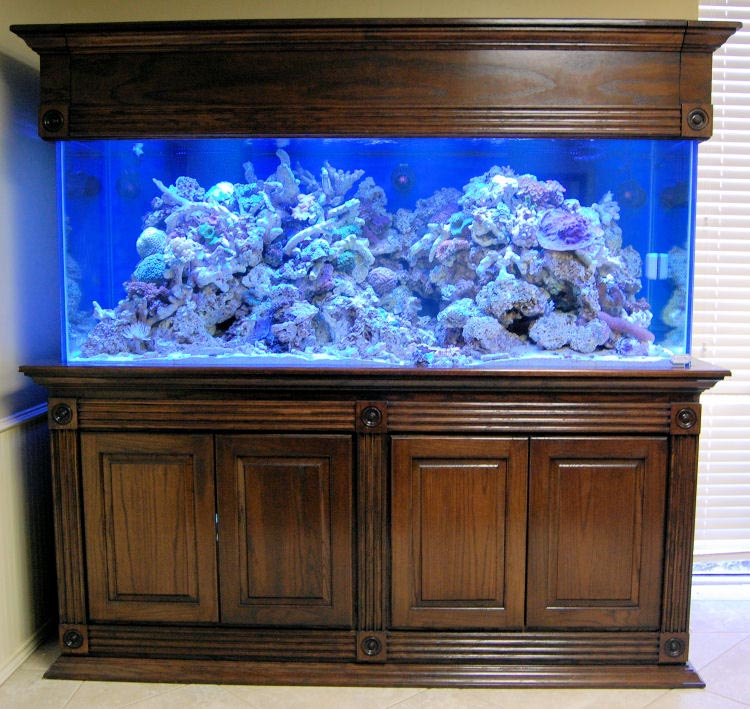 Fish Aquariums and Stands