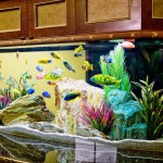 Fish Decoration for Aquarium
