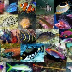 Fish for Saltwater Aquarium