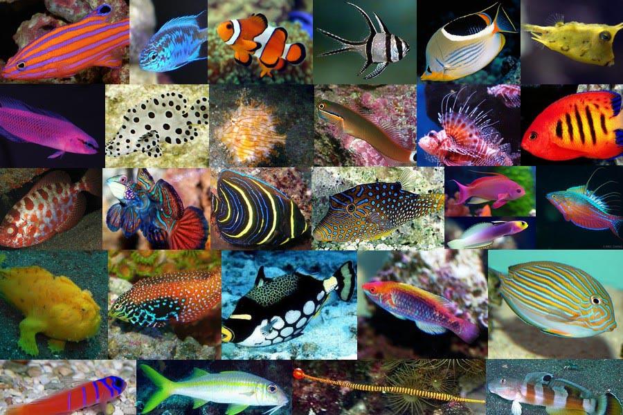 Fish for Saltwater Aquarium