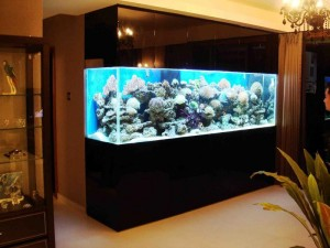 Fish for Wall Mounted Aquarium