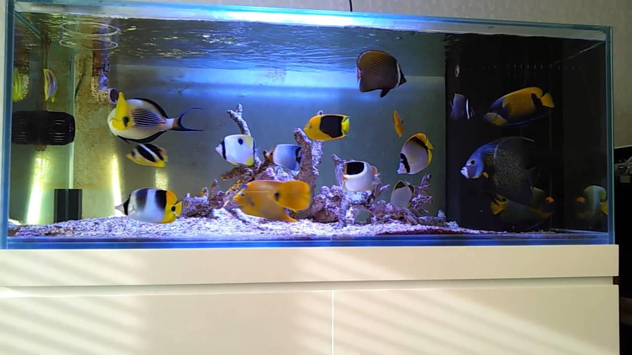 Fish Only Marine Aquarium Setup