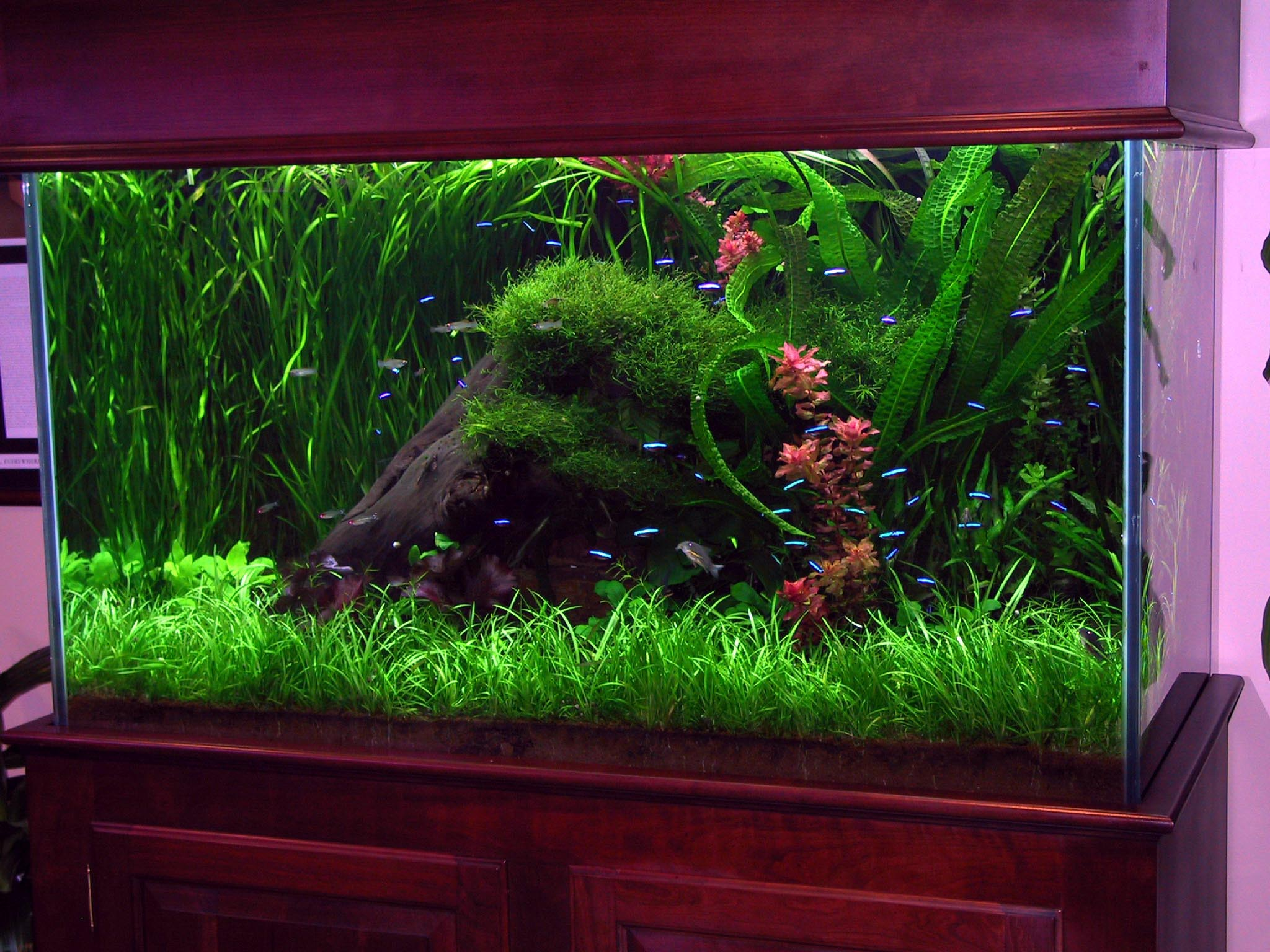 Fish Tank Aquarium Decorating Ideas Aquarium Design Ideas