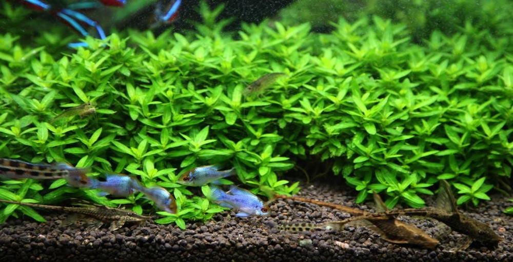 Free Live Aquarium Plants