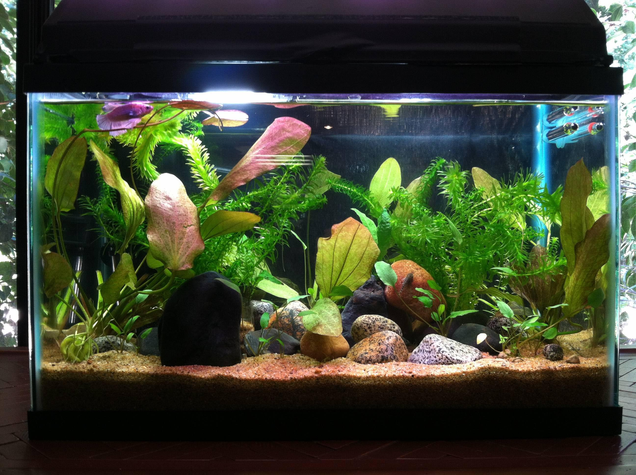 Freshwater aquarium betta fish aquarium design ideas for Betta fish tank ideas